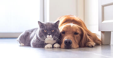 Estate Plan Pet Trust